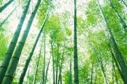 Bambu Ağacındaki Hayat Dersi